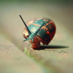 slimy, slimy snail by dephotoise