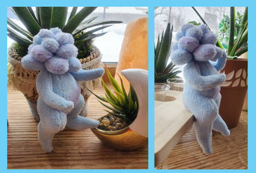 blue moonstone succulent sproutling