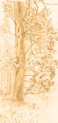 Tree in Ochre - sketch by vanndra