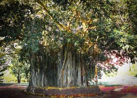 Moreton Bay Fig Tree by vanndra