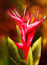 Bird of Paradise by vanndra