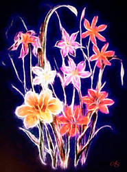 Flowers by vanndra