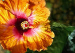 Early Morning Flower