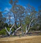 Driftwood Beginnings