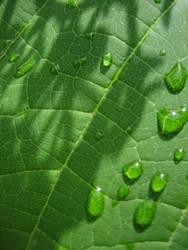 water on leaf 2 by sanneb