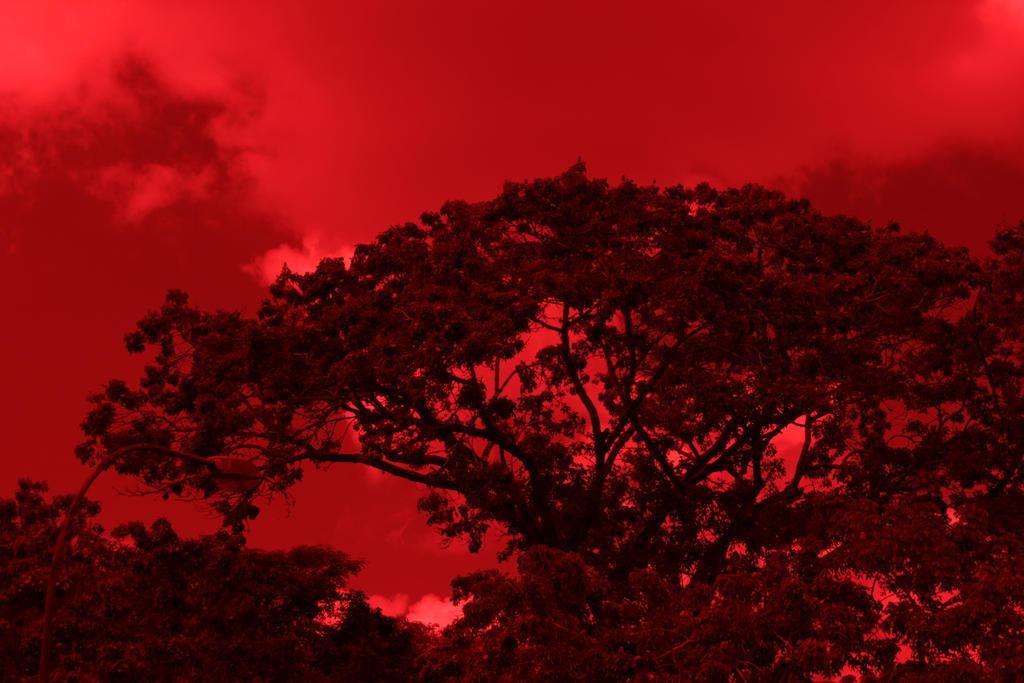 Resultado de imagen para foto filtro rojo