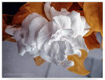 Gardenia by LightSculpting