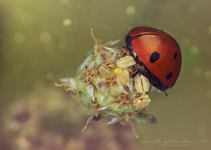 Ladybug by LightSculpting