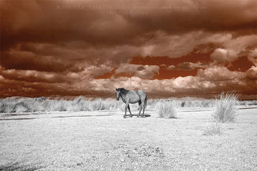 Red Sky -Infrared by LightSculpting