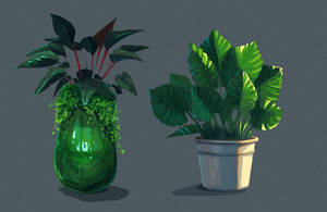 Plants in a pot study