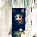.: kitten :.