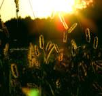 sunset, wednesday...