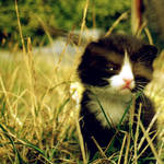 meow.2