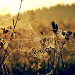 drops, web