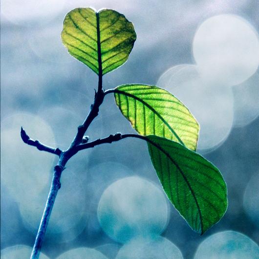 leaves, bokeh by all17