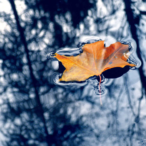 leaf in puddle by all17