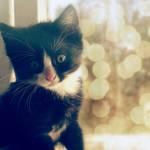 my kitten by all17