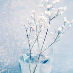 .: delicate :. by all17