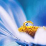.: drop on daisy :.