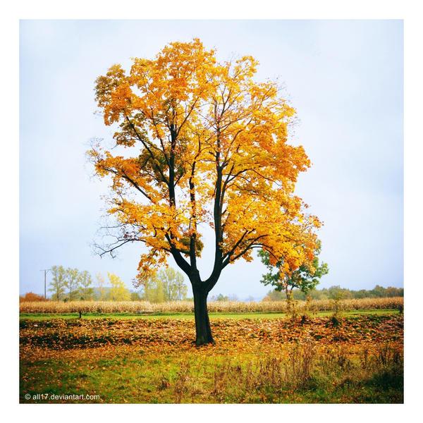 next tree wallpaper