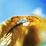 .: dry leaf II :.