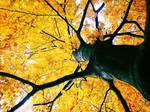 .: autumn tree 2 :.