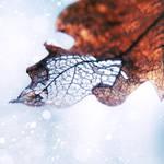 .: dry leaf III :.