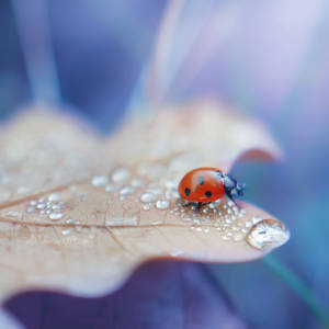 through the droplets