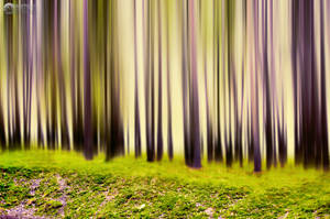 purple and green forest by all17