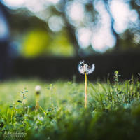 freelensing by all17