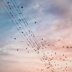 birds meeting by all17