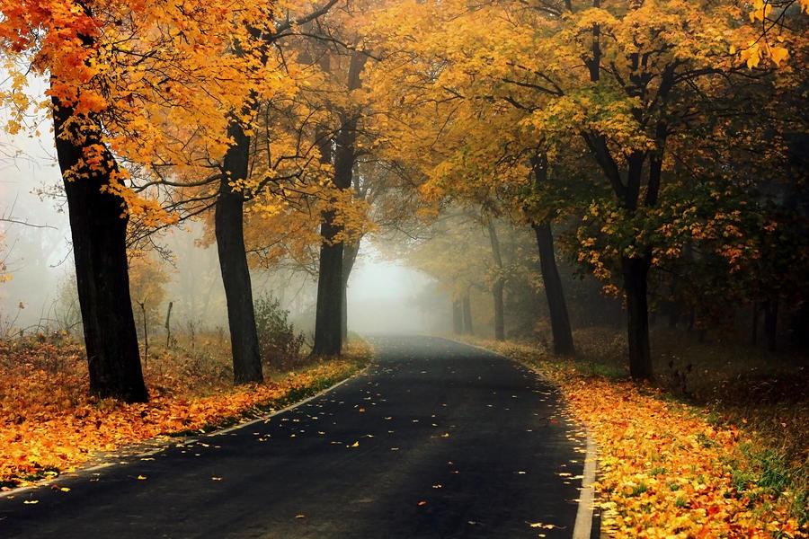 Gold autumn by Madeleine1337