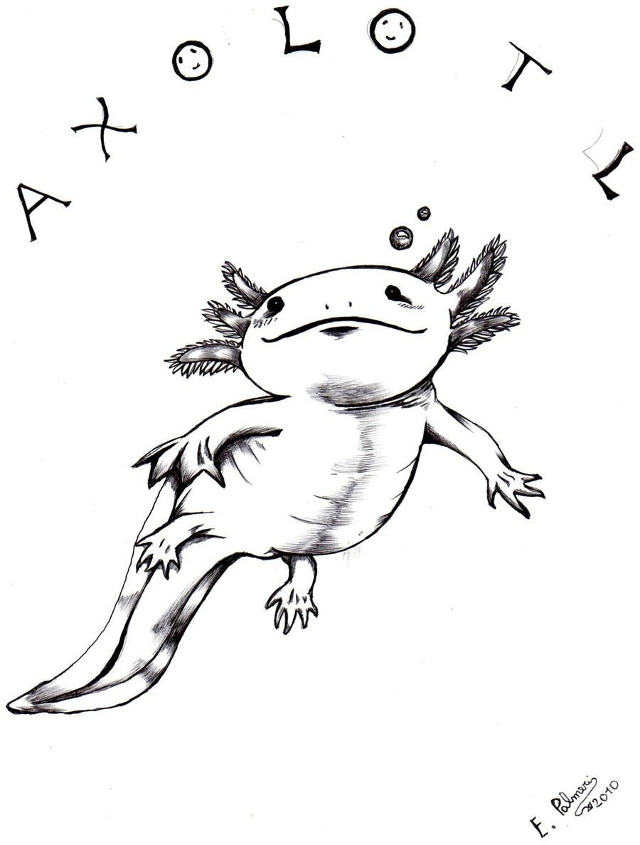 Axolotl Drawing