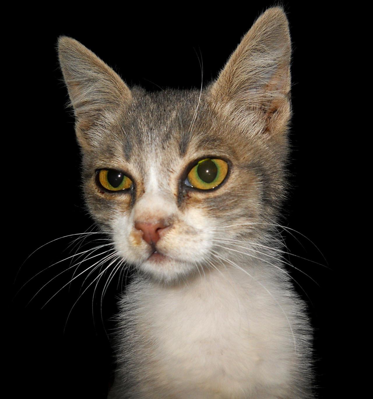 Cat by FuriarossaAndMimma