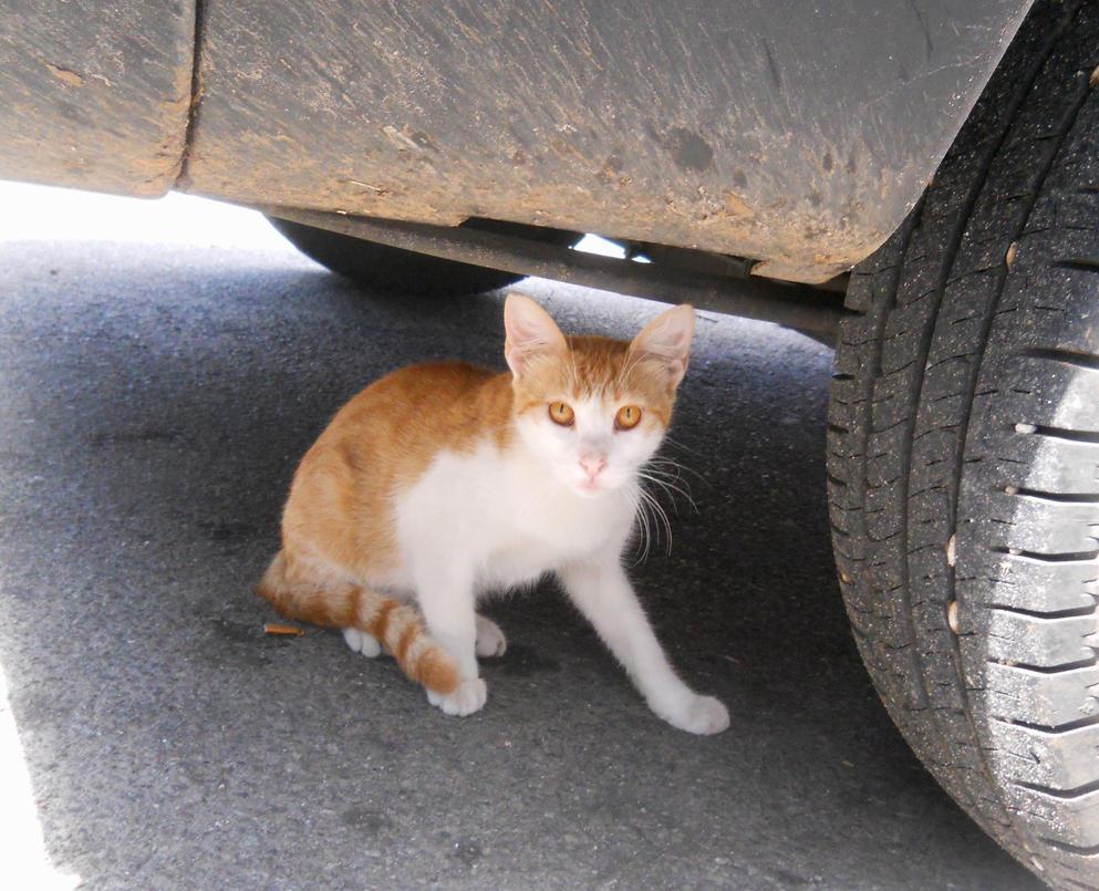 cat under a car by furiarossaandmimma on deviantart. Black Bedroom Furniture Sets. Home Design Ideas