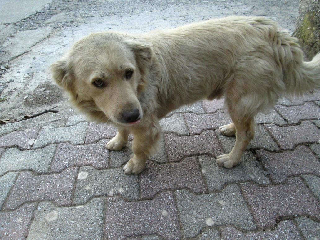 Little dog 3 by FuriarossaAndMimma