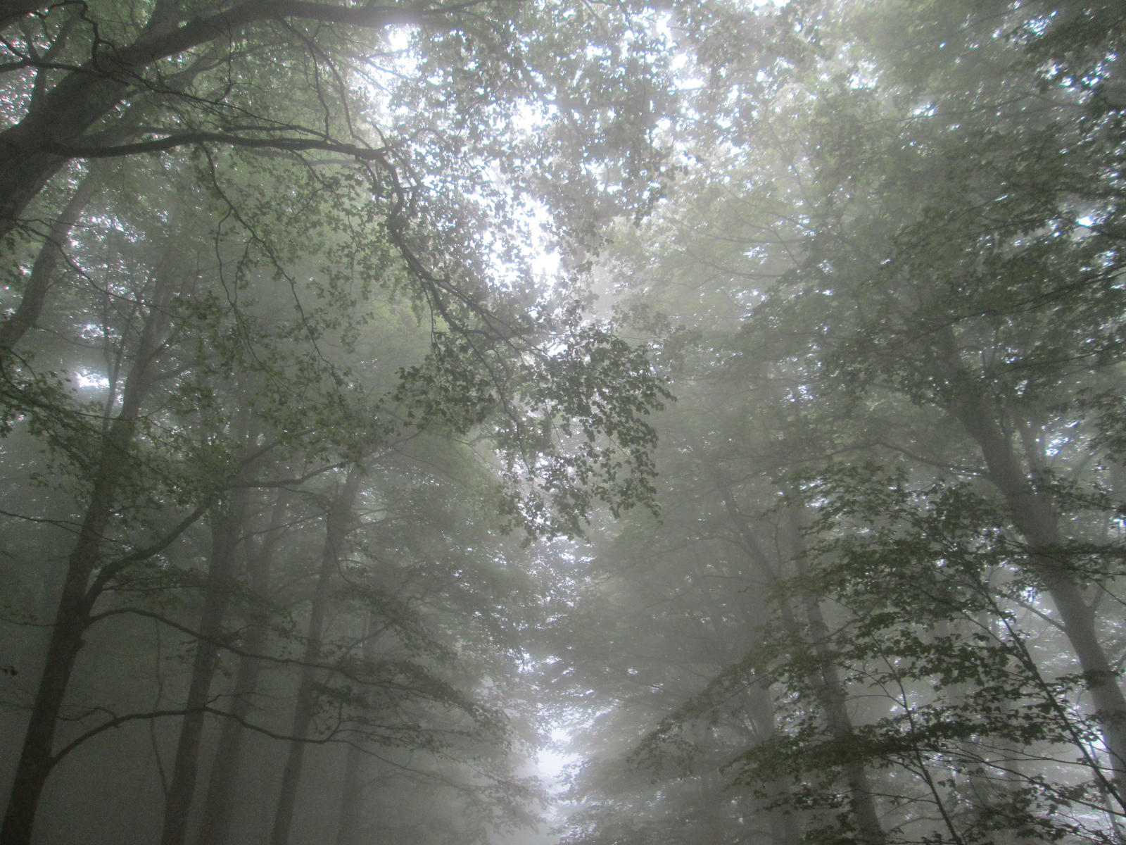 Misty woods 2 by FuriarossaAndMimma