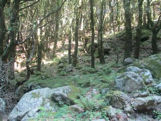 Aspromonte woods 4 by FuriarossaAndMimma