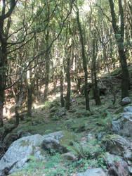 Aspromonte woods 5 by FuriarossaAndMimma