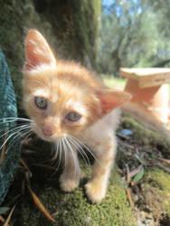Red cat 1 by FuriarossaAndMimma