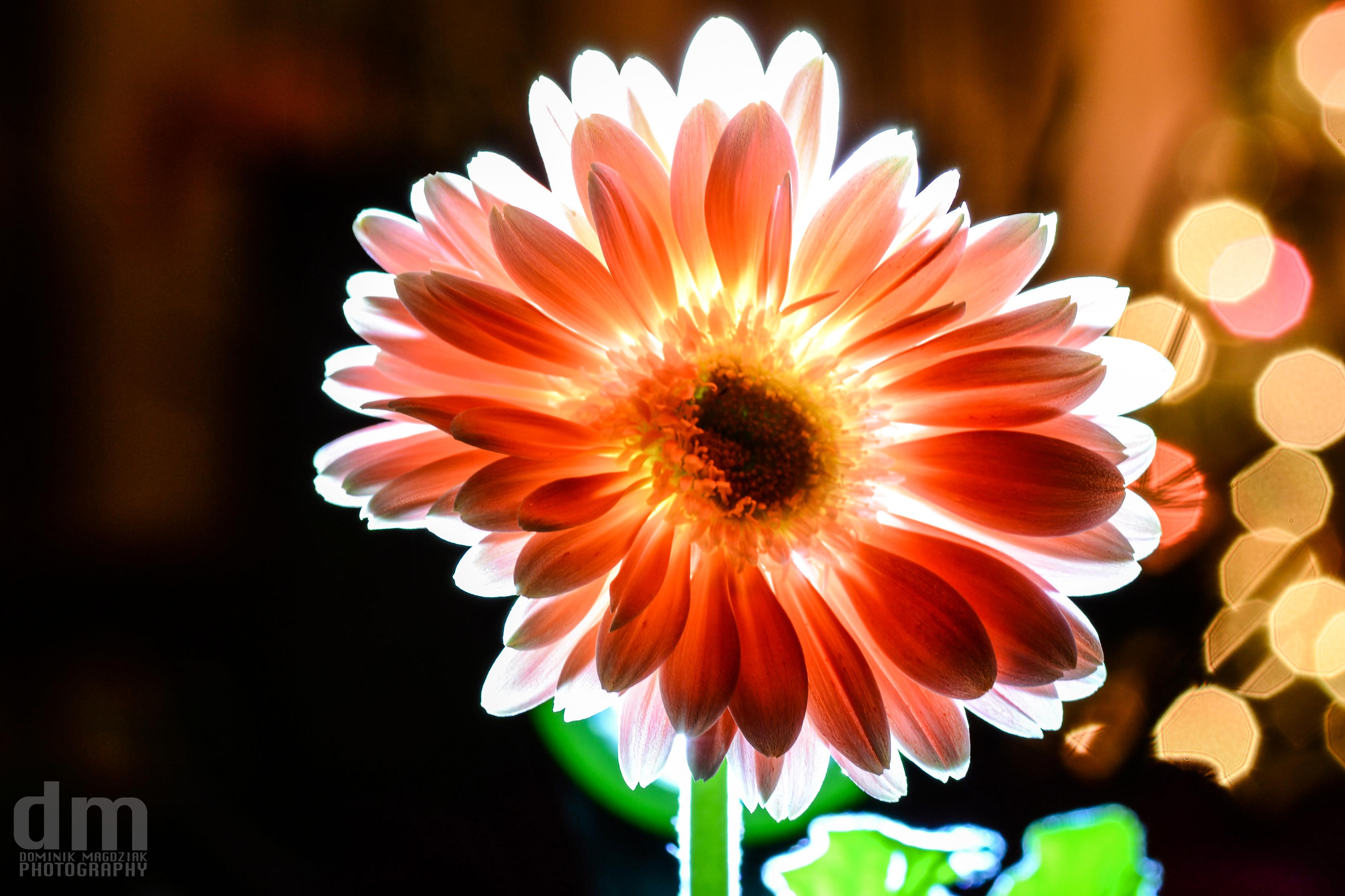 Flower Paint by DominikM on deviantART