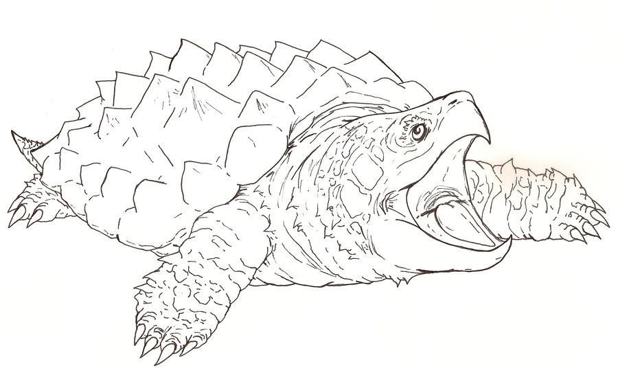 Snapping Turtle Drawings