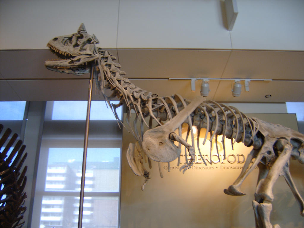 http://fc08.deviantart.net/fs70/i/2013/051/2/6/carnotaurus_fossil_by_origamipaul-d5vlma9.jpg