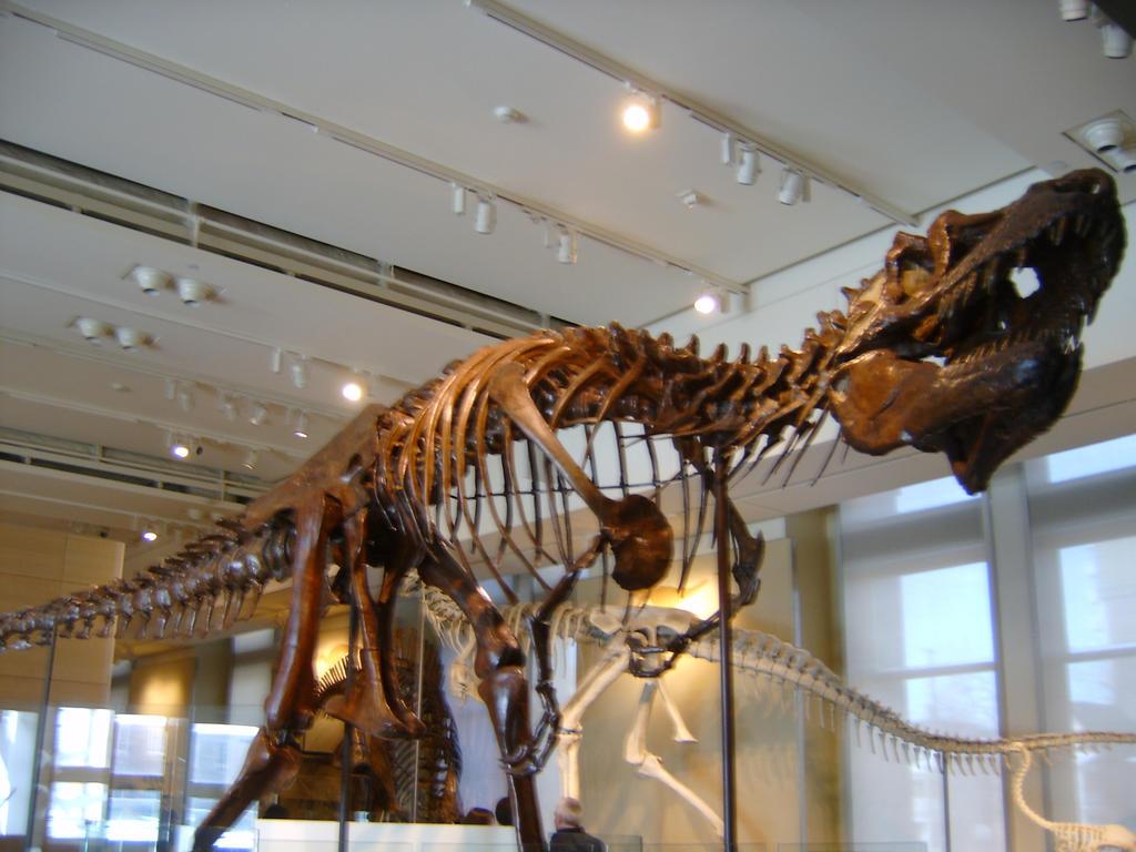daspletosaurus skeleton by origamipaul on DeviantArt