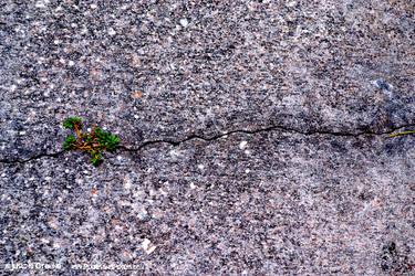 Step On a Crack...
