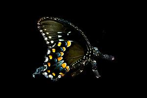 Butterfly Stock by FairyFindings