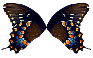 Butterfly Wings - Natural by FairyFindings