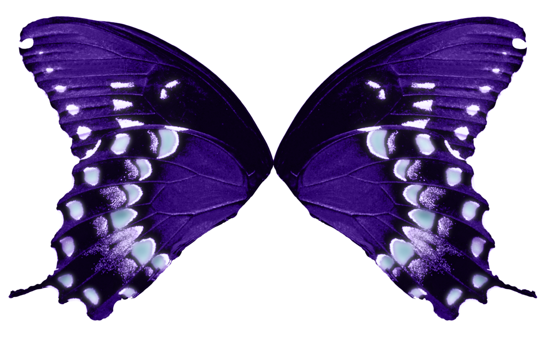 Butterfly Wings-Purple Aqua by FairyFindings on DeviantArt