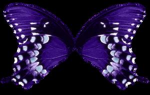 Butterfly Wings-Purple Aqua by FairyFindings