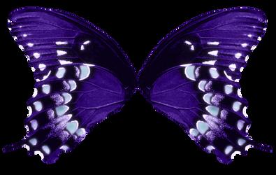 Butterfly Wings-Purple Aqua
